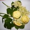 Bodzás-citromos olivaszappan