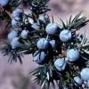 Mosakodjunk liszttel! – Korianderes-borókás-gyömbéres mosakodópor